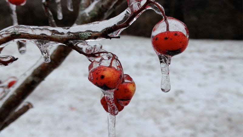 frozenbudblog